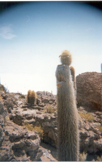 28 29-12-99 Cactus op Isla de Pescade in het Salar de Uyuni 29-12-1999